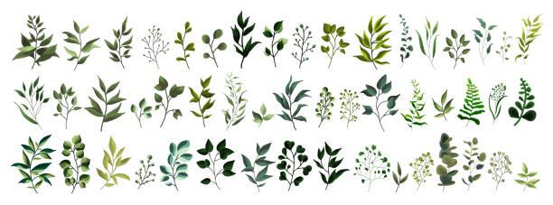 kolekcja liści zieleni roślin leśnych ziół tropikalnych liści - gałązka stock illustrations