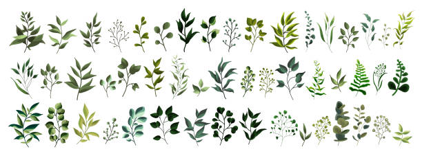 collection of greenery leaf plant forest herbs tropical leaves - gałązka stock illustrations