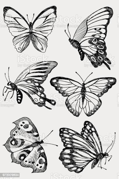 Collection of hand drawn black silhouette butterflies vector in vector id973329834?b=1&k=6&m=973329834&s=612x612&h=tti8x88s1ywzi0ra2g0g0evewpsjq2vqgxsigzylqck=