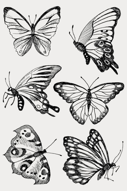 collection of hand drawn black silhouette butterflies. vector illustration in vintage style. - butterfly stock illustrations