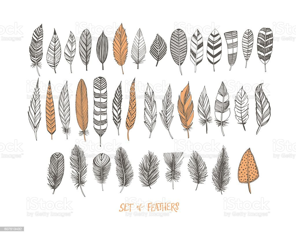 Collection of hand drawn decorative feathers. vector art illustration
