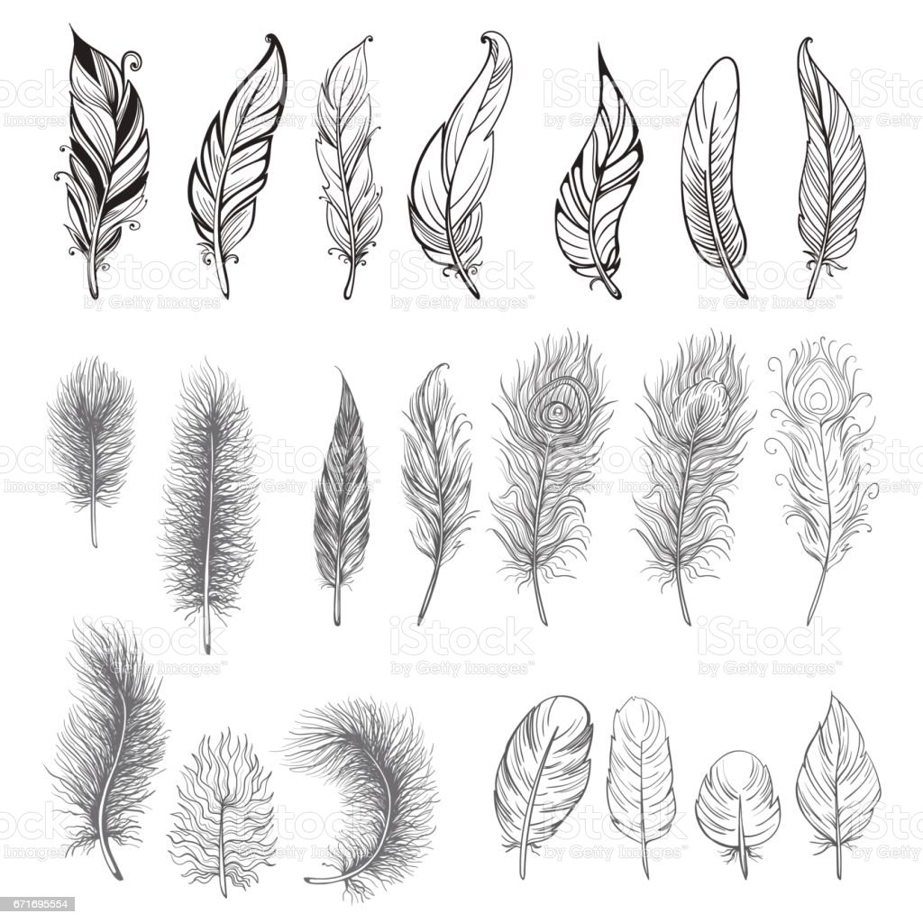 Collection of hand drawn feather. vector art illustration