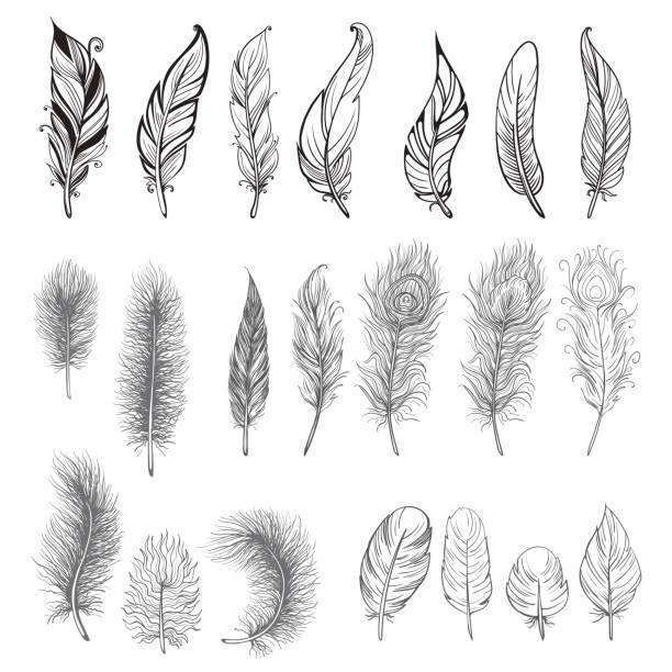 Collection of hand drawn feather. Collection of hand drawn feather. Ink illustration. Isolated on white background. Set of decorative animals feathers. Hand drawn vector art. feather stock illustrations