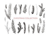 Collection of hand drawn fir branches. Christmas botanical elements.
