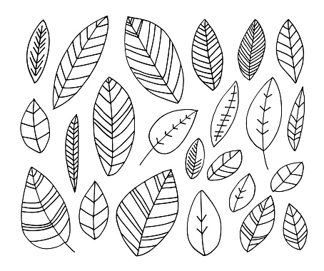 Collection of hand drawn leaves.