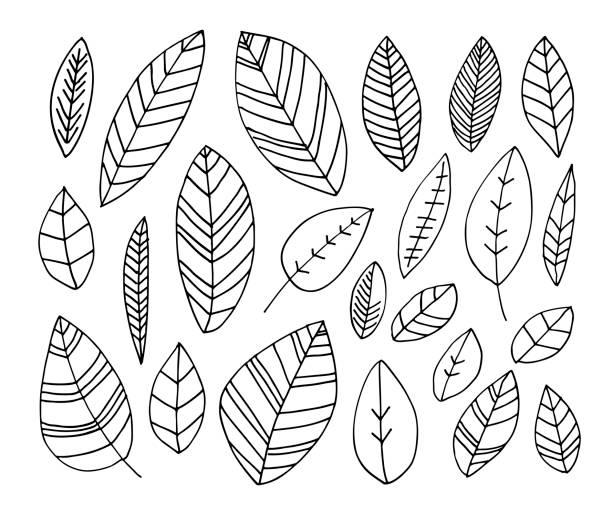 手工繪製的葉子的彙集。 - 葉狀花紋 幅插畫檔、美工圖案、卡通及圖標