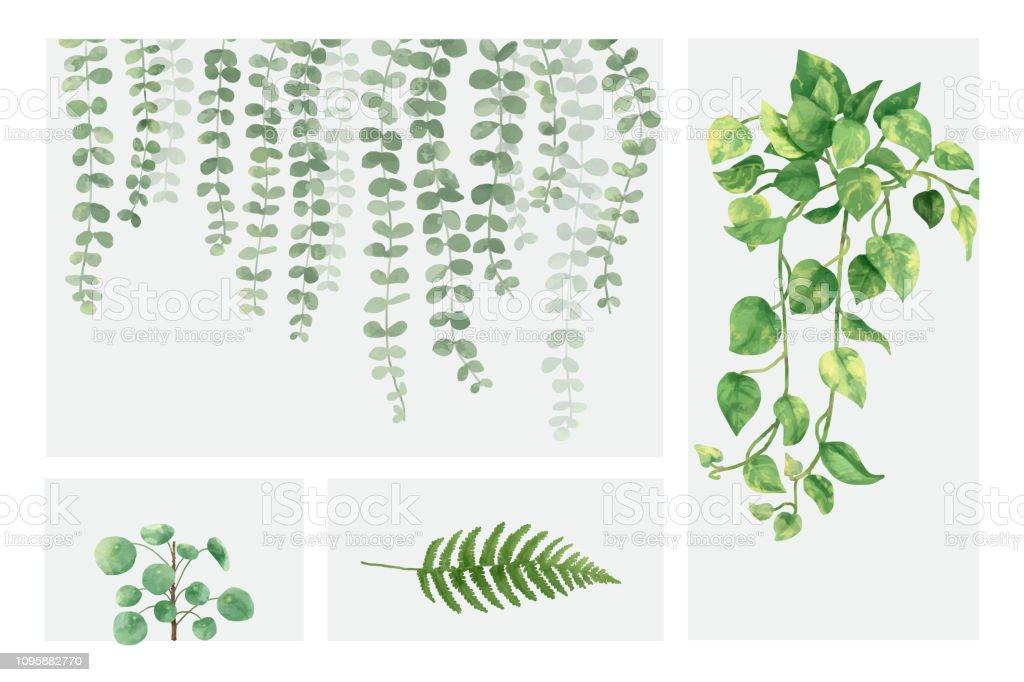 best hanging vines illustrations  royalty