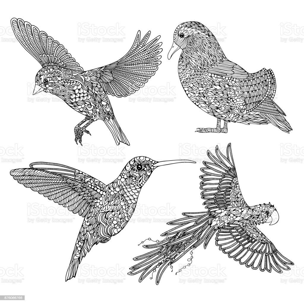 Ilustración de Colección De Aves Dibujadas A Mano Página Para ...