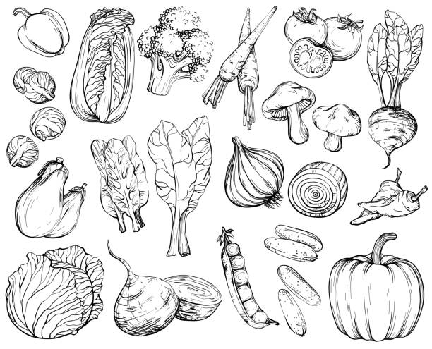 collection of hand-drawn vegetables, black and white. - lettuce stock illustrations