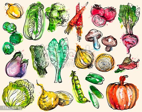Collection of hand-drawn watercolor vegetables, vector illustration