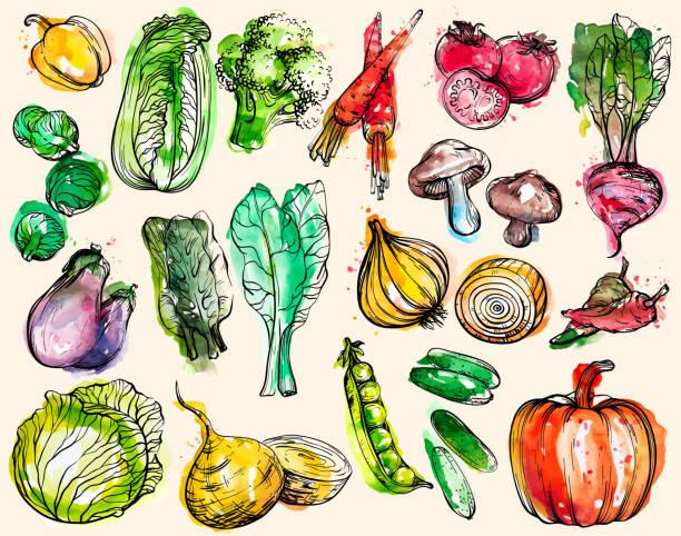 ilustraciones, imágenes clip art, dibujos animados e iconos de stock de colección de verduras de acuarela dibujadas a mano - vegetal