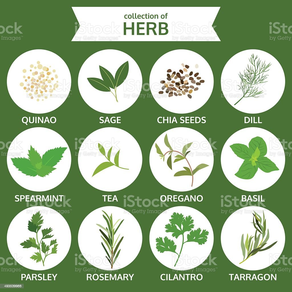 collection of herb, food vector, flat icon set vector art illustration
