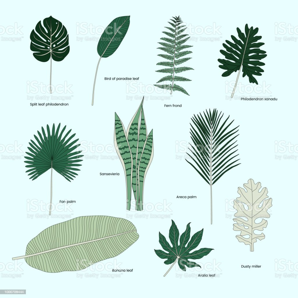 Colección de hojas tropicales ilustrados - ilustración de arte vectorial