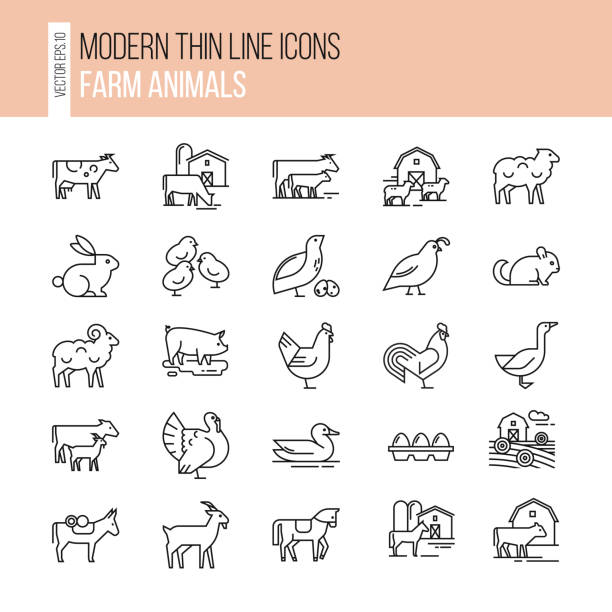 Collection of illustrations in line style, well-drawn and isolated on white background Vector set of farm animals icon set. Collection of illustrations in line style, well-drawn and isolated on white background. turkish stock illustrations