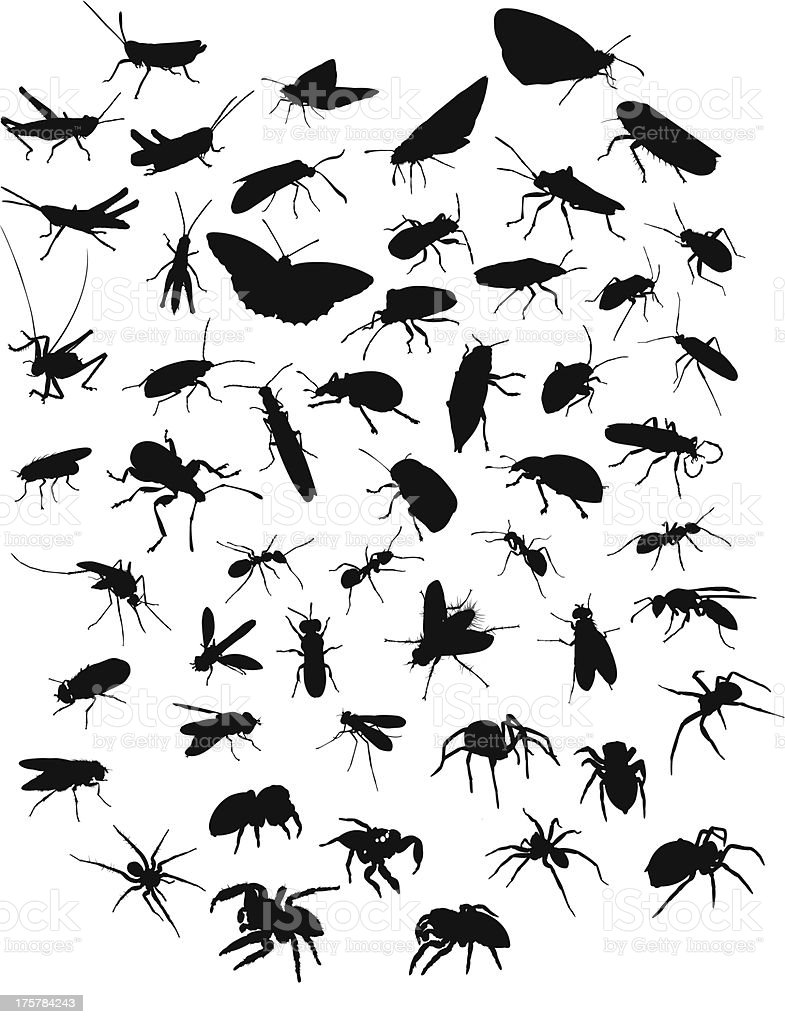 Collection of insects and spiders vector art illustration