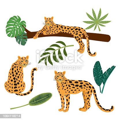 Collection of leopards and tropical leaves. Vector illustrations isolated on white background.