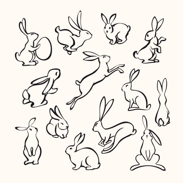 sammlung von linie kunst kaninchen - kaninchen stock-grafiken, -clipart, -cartoons und -symbole