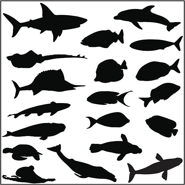 Collection of many fish and sea life silhouettes Fish and sea life silhouettes including angel fish, coral reef fish, sardine, shark, turtle, octopus, ray, sailfish, whale, seal and a dolphin. great white shark stock illustrations