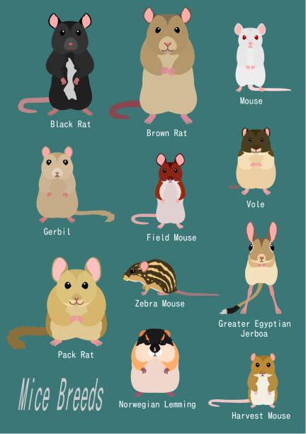 マウスの品種のコレクション ベクターアートイラスト