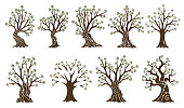Collection of olive tree with branches and green leaves. Hand drawn ancient greek labels, natural vegetarian shop signs. Premium quality design elements concept.