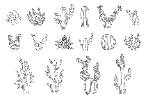 Collection of outline black vector cactus elements