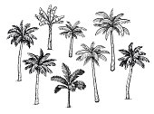 Collection of palm trees. Ink sketch isolated on white background. Hand drawn vector illustration. Retro style set.