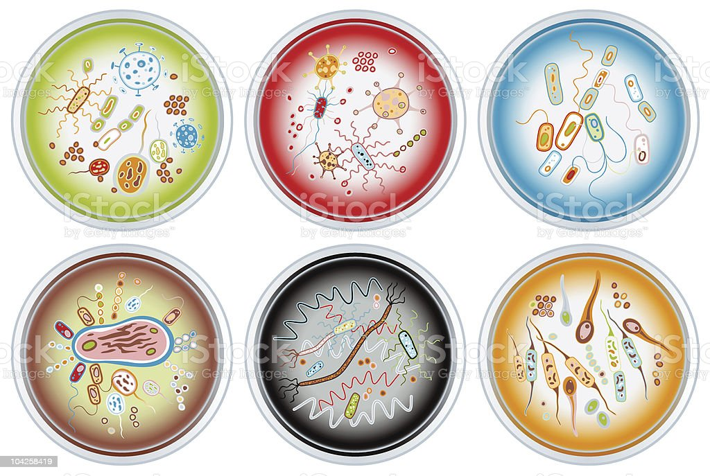 Collection of Petri Dishes royalty-free stock vector art