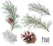 松の枝やコーン、白い背景の上の針のコレクション手デジタル描画、水彩風、デザイン、クリスマスの植物、ベクトルの装飾的な植物イラスト
