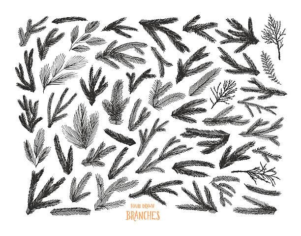 bildbanksillustrationer, clip art samt tecknat material och ikoner med collection of pine tree and spruce branches. - gran