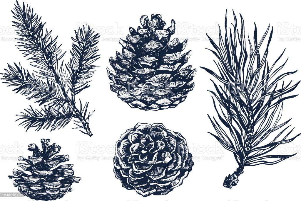 Collection of pinecones and coniferous branches ink illustrations.