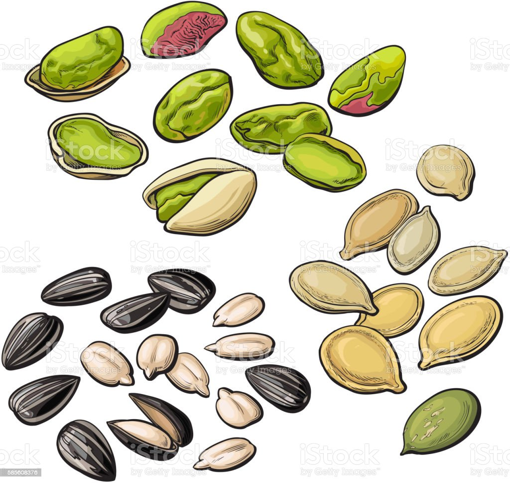 royalty free pumpkin seed clip art vector images illustrations rh istockphoto com seeds images clipart speed clip art