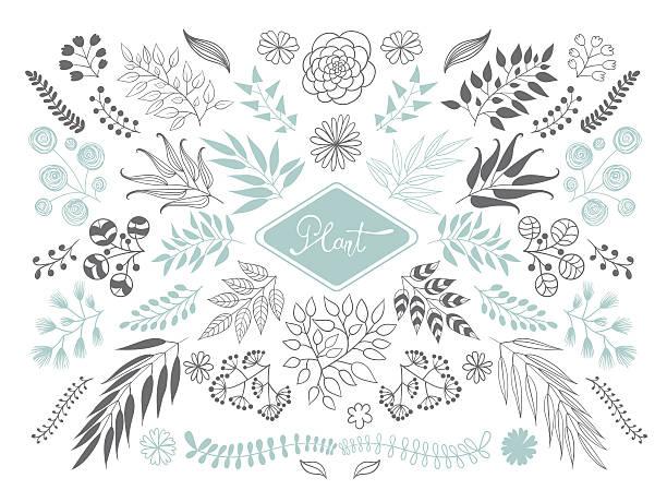 kolekcja roślin i oddziałów. - gałązka stock illustrations