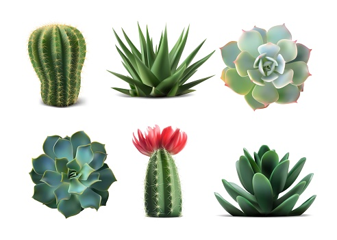 Collection of popular indoor plants elements and succulents rosettes varieties including pin cushion cactus realistic collection isolated realistic vector EPS