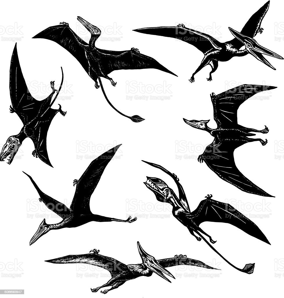 collection of prehistoric flying monsters royalty-free collection of prehistoric flying monsters stock vector art & more images of animal hair