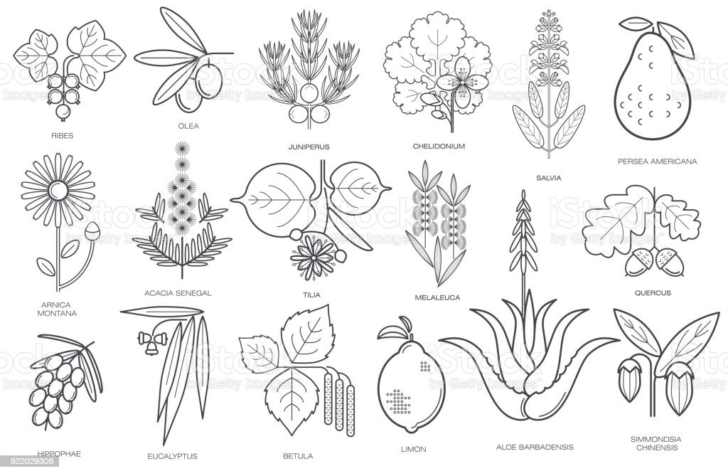 Collection of simple images of medical plants vector art illustration