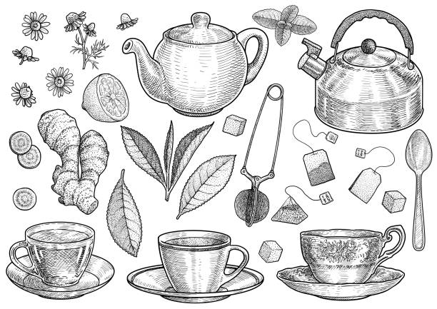 Collection of tea illustration, drawing, engraving, ink, line art, vector Illustration, what made by ink and pencil on paper, then it was digitalized. teapot stock illustrations