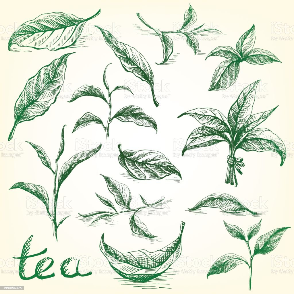 Collection of tea leaves. vector art illustration