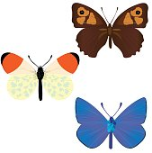 Collection of three common butterflies