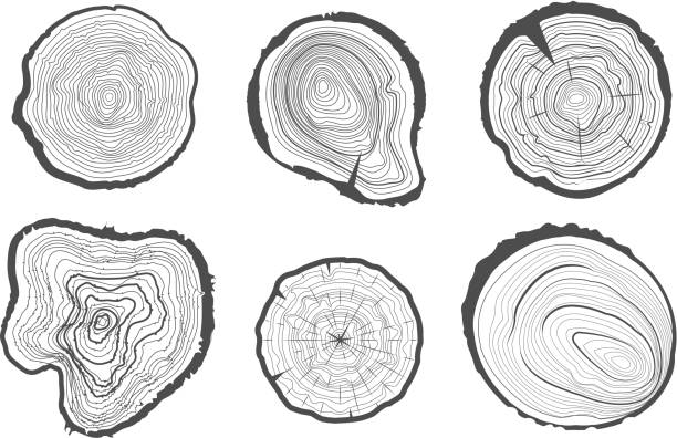 stockillustraties, clipart, cartoons en iconen met collection of tree-rings. vector graphics. - boomstronk