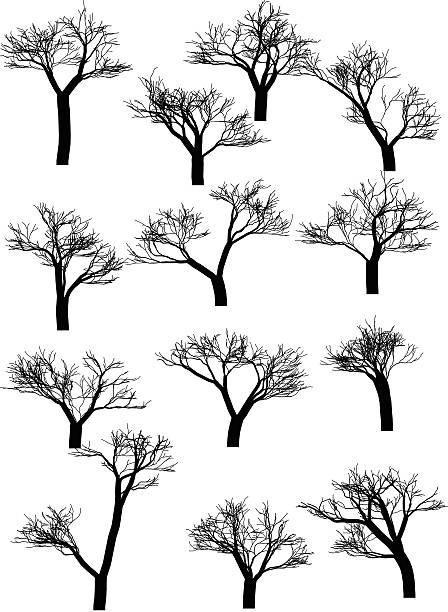 sammlung von bäumen silhouetten - 2015 stock-grafiken, -clipart, -cartoons und -symbole