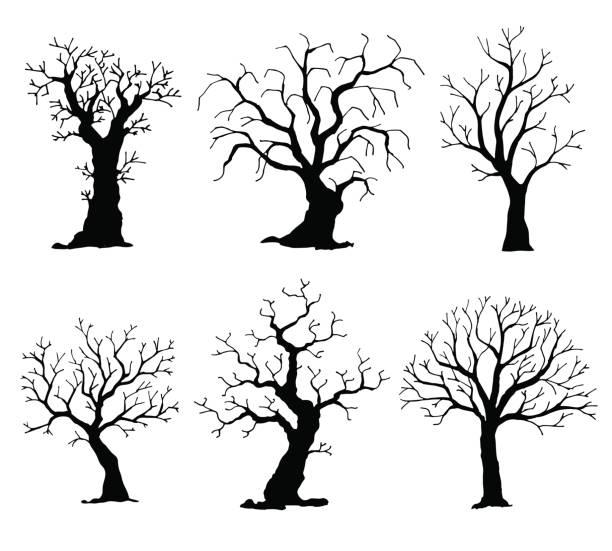 sammlung von bäumen silhouetten. vektor-baum isoliert auf weißem hintergrund - winterruhe stock-grafiken, -clipart, -cartoons und -symbole