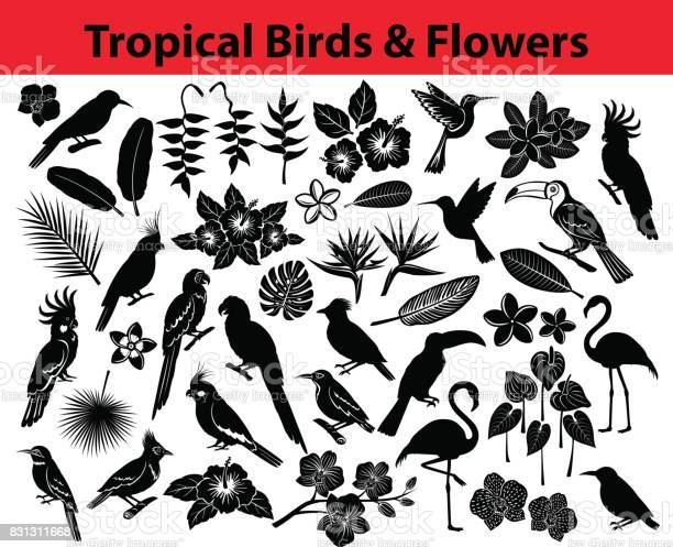 Collection of tropical exotic birds parrots flowers and some leaves vector id831311668?b=1&k=6&m=831311668&s=612x612&h=blxczv qyyrm e nd4caxmt p7fpbt1a5uoljs9tu y=