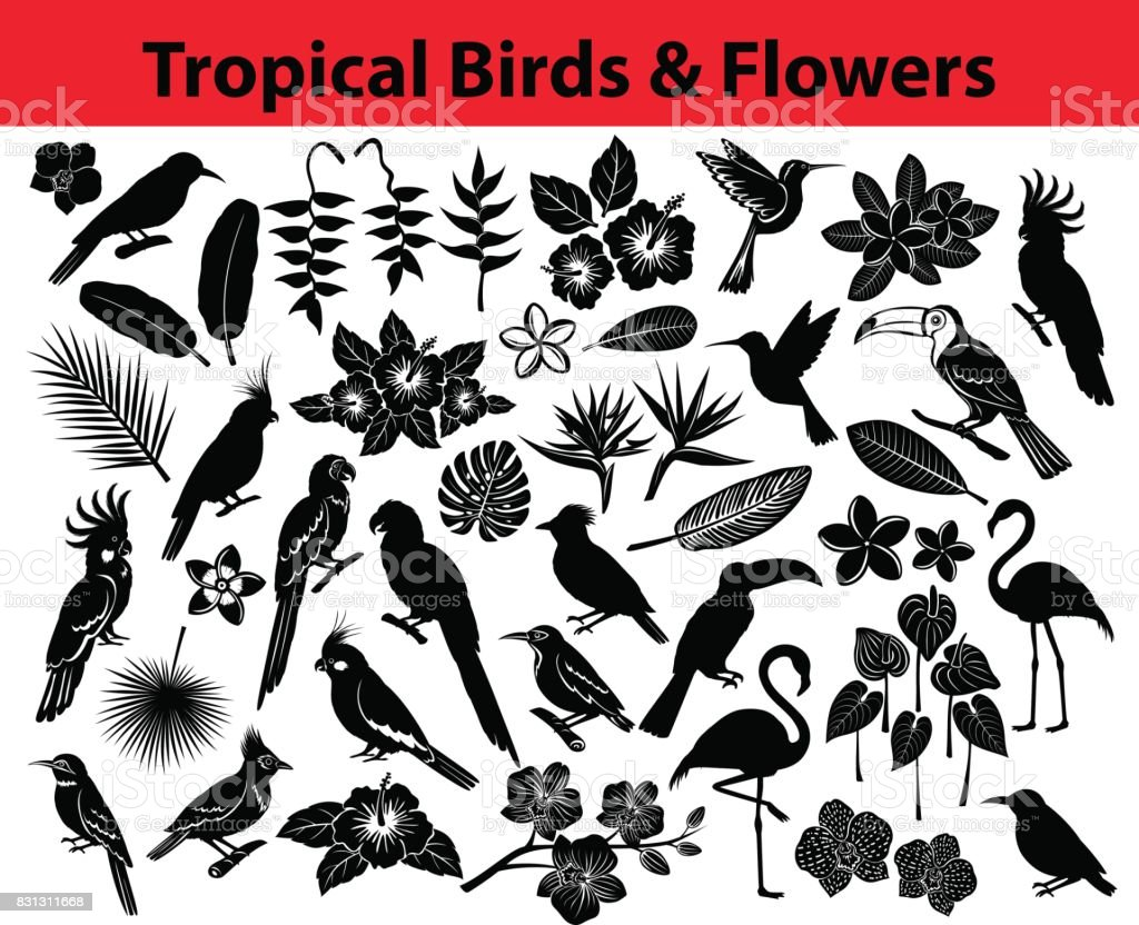 Collection of tropical exotic birds, parrots, flowers and some leaves Silhouettes in black color vector art illustration