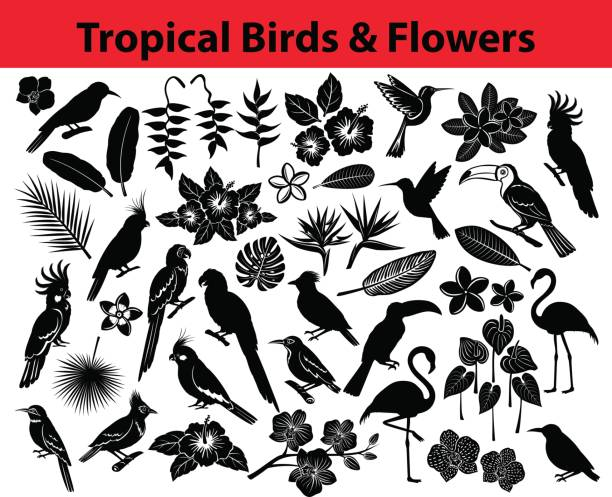 Collection of tropical exotic birds, parrots, flowers and some leaves Silhouettes in black color Collection of tropical exotic birds, parrots, flowers and some leaves Silhouettes in black color as colibri, blue and yellow, scarlet macaw, amazon parrot, pink flamingos, cockatoo, cockateil, bee eater, brazilian cardinal, honeycreeper, hummingbird;   heliconia, plumeria, hibiskus, orchid, anthurium bird of paradise plant stock illustrations
