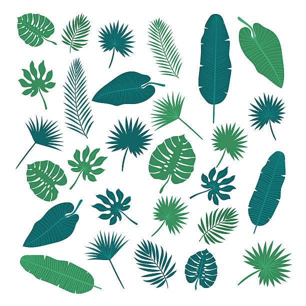 Collection of tropical leaves. Nature elements for your design - ilustración de arte vectorial