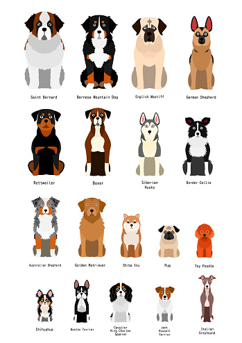 collection of  various breed dog