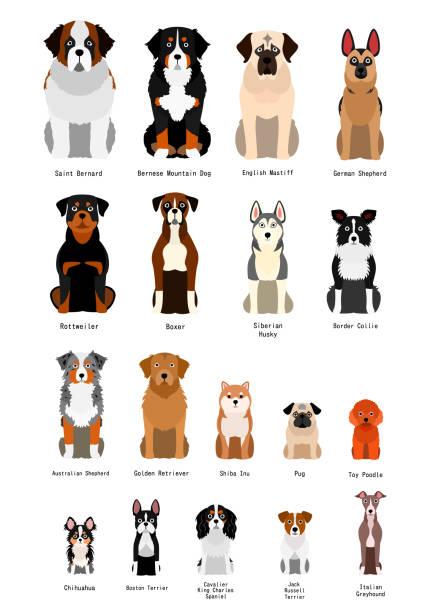 様々な品種犬のコレクション ベクターアートイラスト
