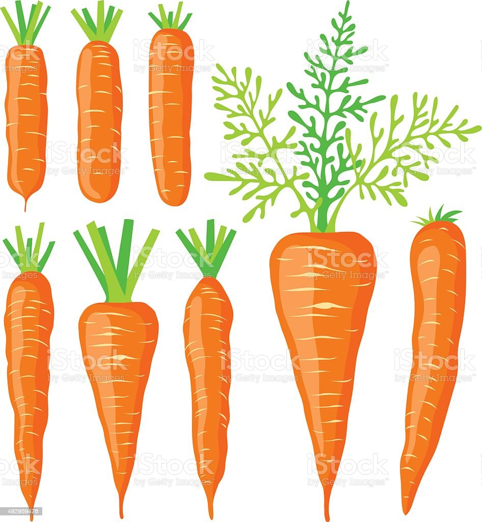 Collection of various carrots, vector illustrations vector art illustration