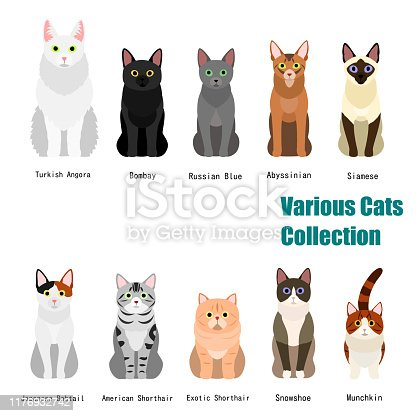 collection of  various cats