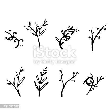 collection of Vector branches and leaves. Hand drawn floral elements. Vintage botanical illustrations. vector